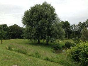 Sadhana in het Park Leeuwarden